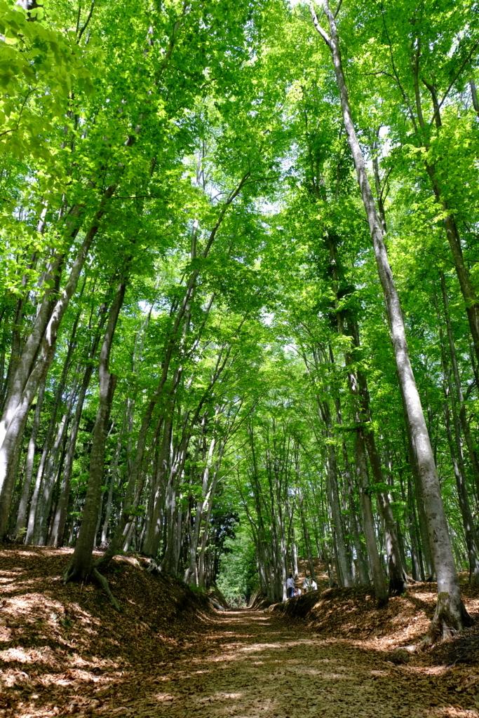 美人林の山道