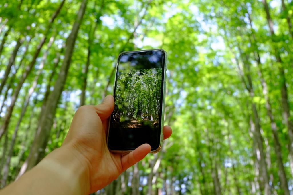 美人林の山道でPinP