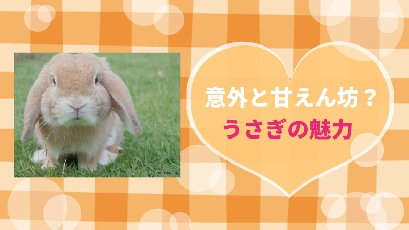 【うさぎを飼うとどうなる?】実は甘えん坊?可愛いウサギの実態