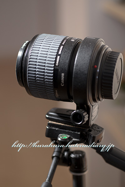 MP-E65mm F2.8 1-5×マクロフォト