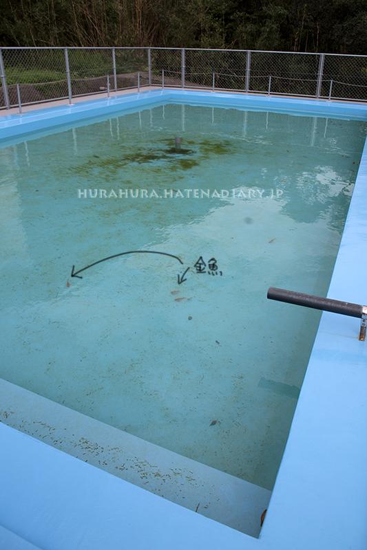 室戸廃校水族館プール