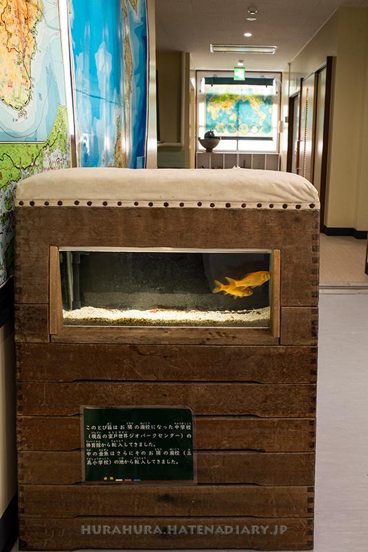 室戸廃校水族館跳び箱水槽