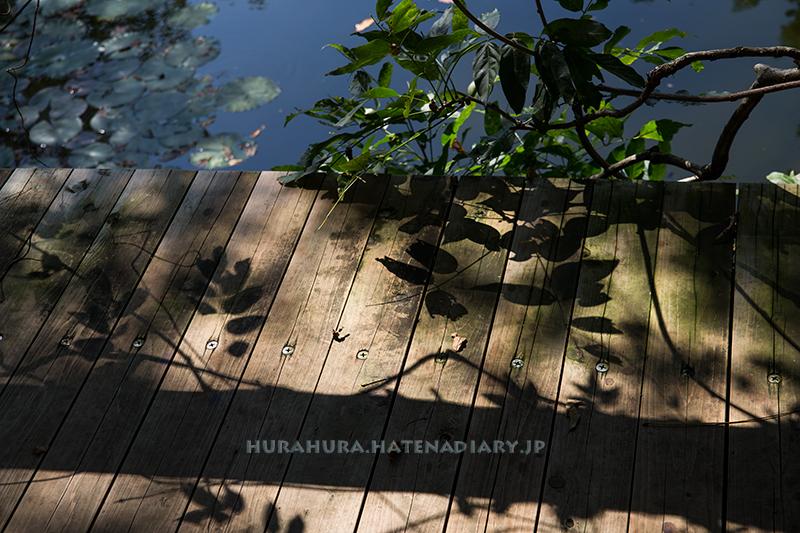 モネの庭マルモッタン影