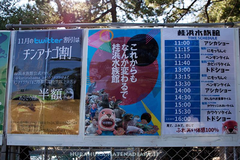 桂浜水族館おとどちゃんポスター