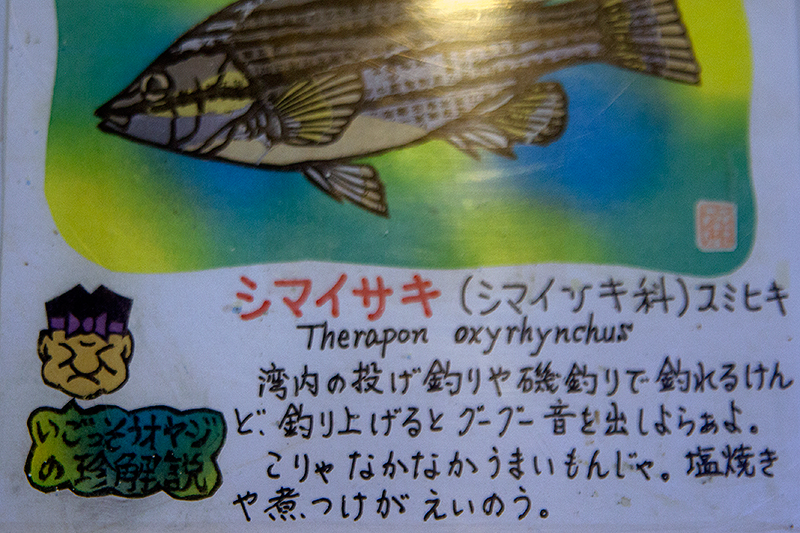 お魚の説明