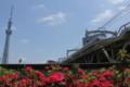 [Train][花]東武鉄道とスカイツリー