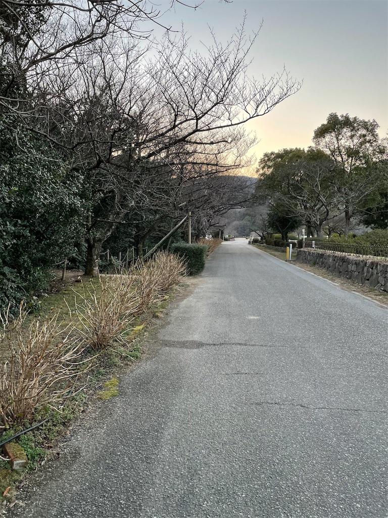 f:id:seikatsubijutsu:20210222190541j:image