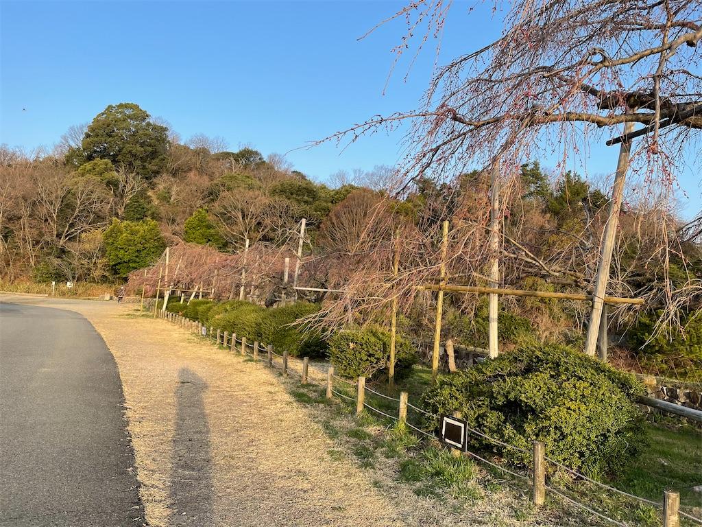 f:id:seikatsubijutsu:20210317194535j:image