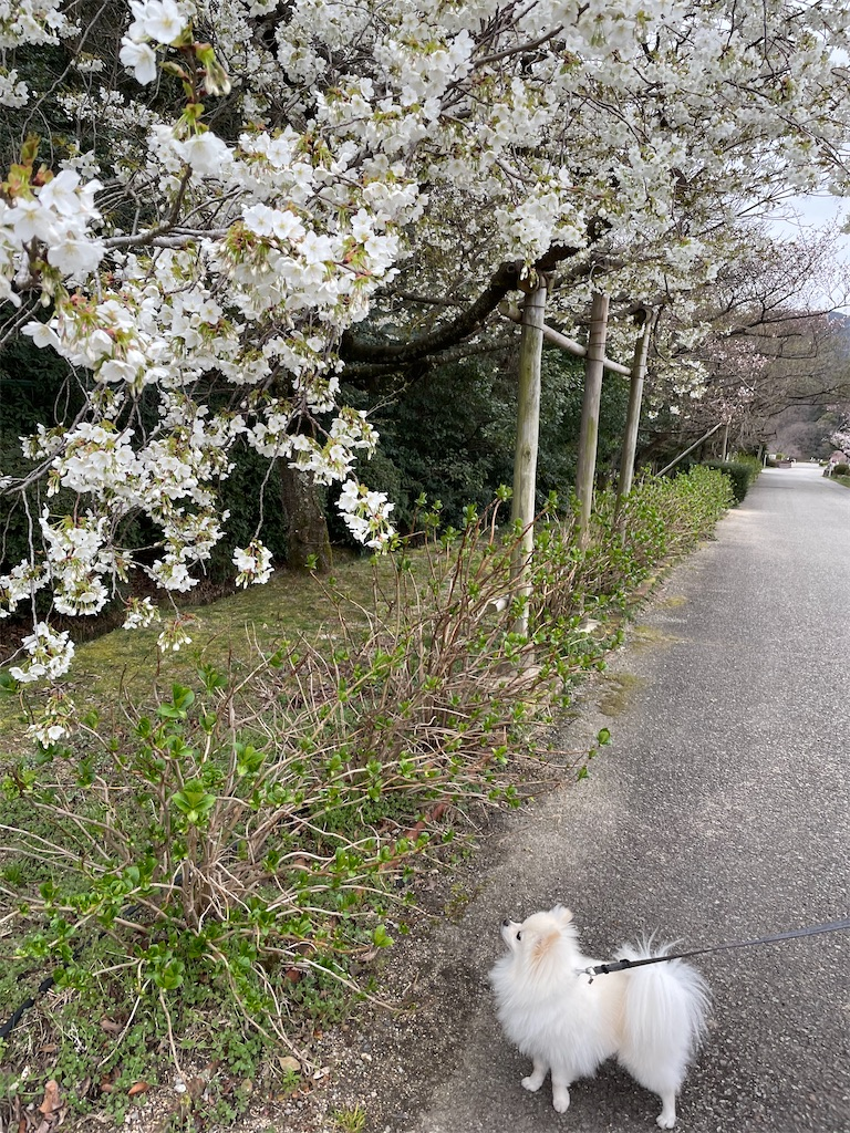 f:id:seikatsubijutsu:20210320231900j:image