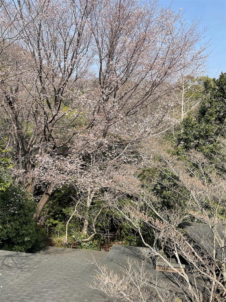 f:id:seikatsubijutsu:20210329195817j:image