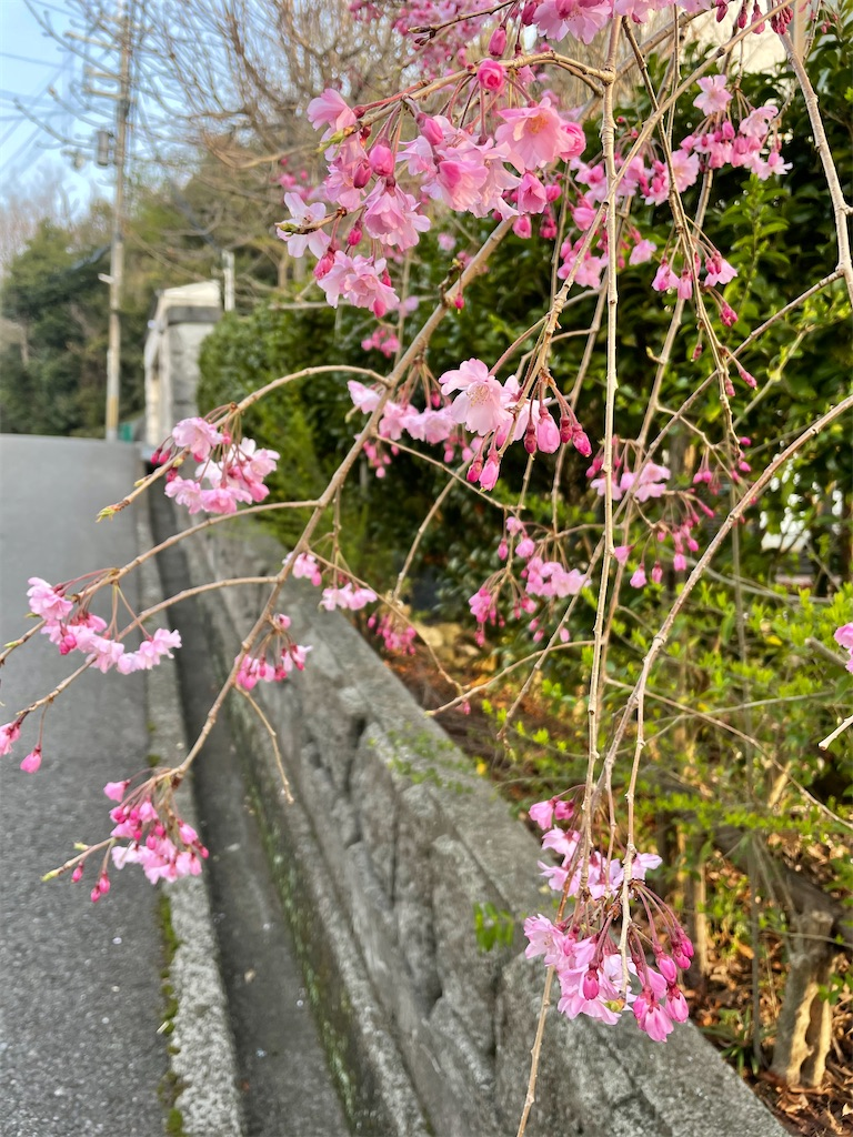 f:id:seikatsubijutsu:20210330210532j:image