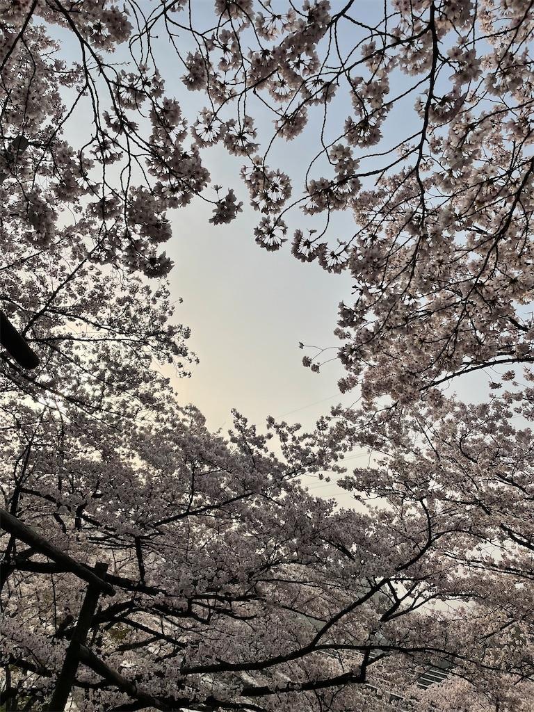 f:id:seikatsubijutsu:20210330210638j:image