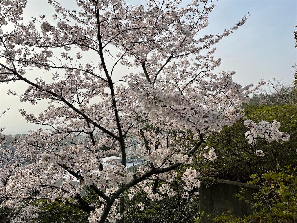 f:id:seikatsubijutsu:20210330211308j:image