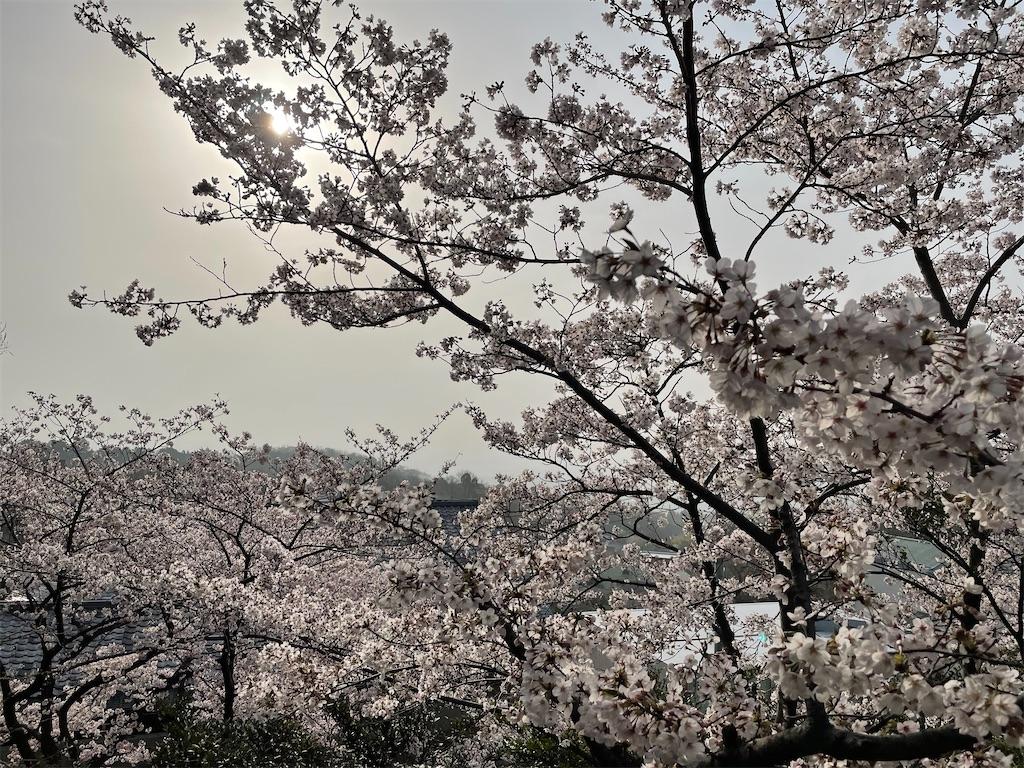 f:id:seikatsubijutsu:20210330211351j:image