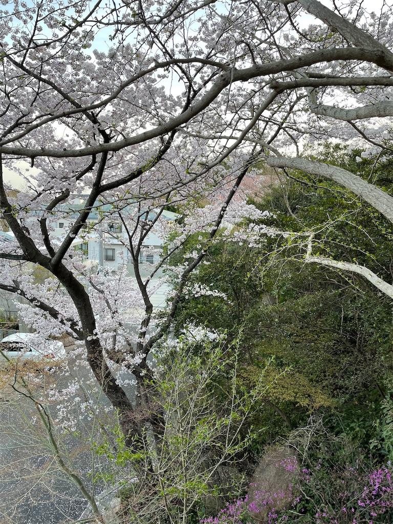 f:id:seikatsubijutsu:20210331220016j:image