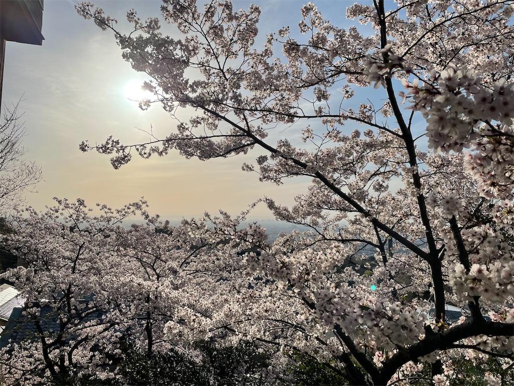f:id:seikatsubijutsu:20210401202453j:image