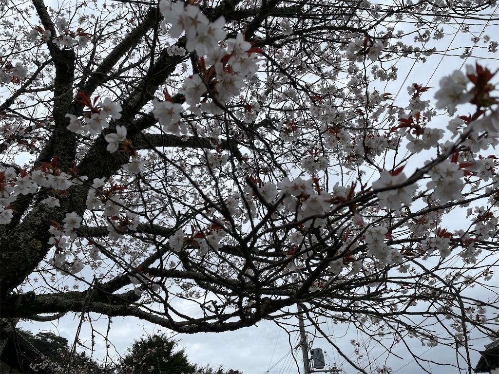 f:id:seikatsubijutsu:20210404222856j:image