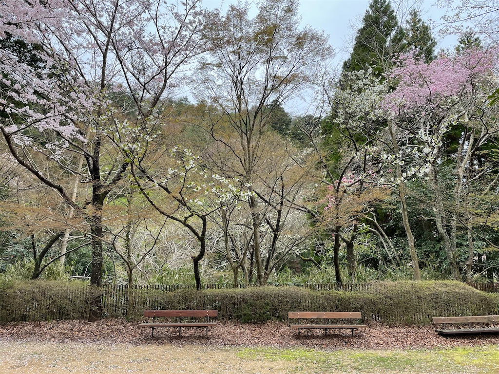 f:id:seikatsubijutsu:20210404223920j:image
