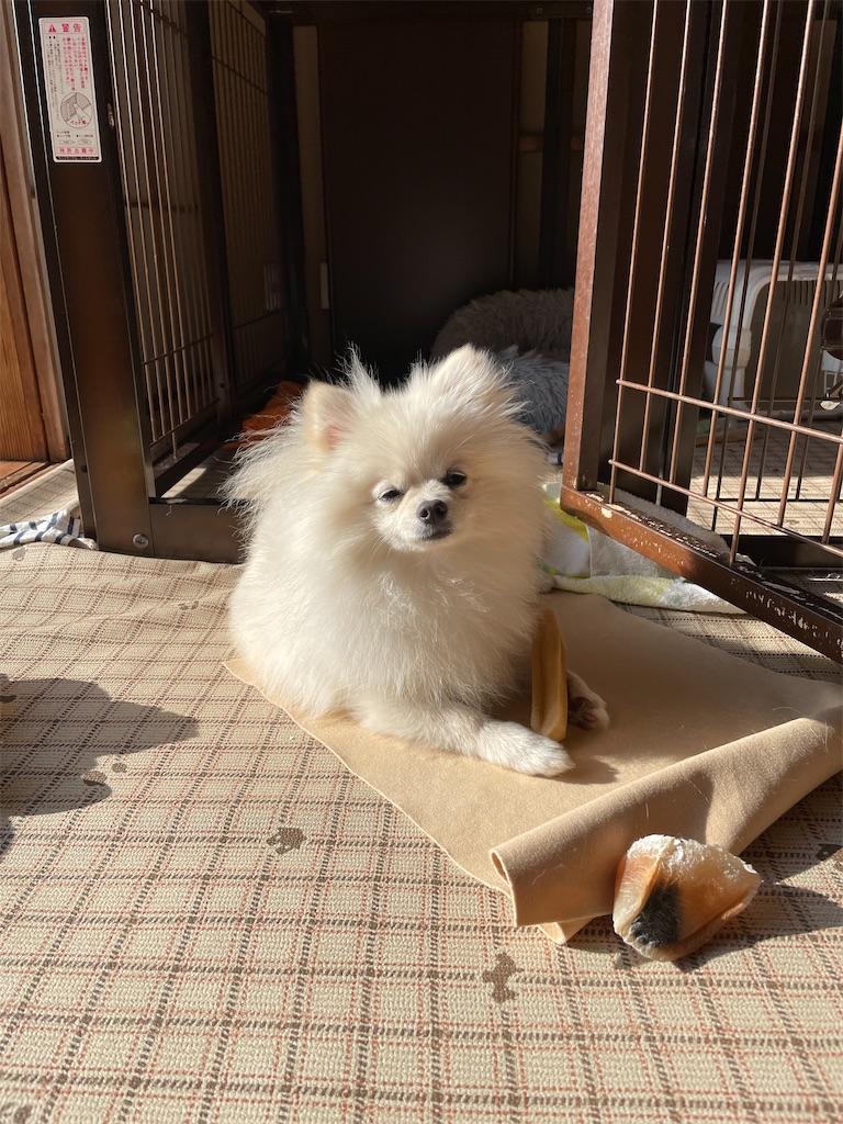 f:id:seikatsubijutsu:20210410191050j:image
