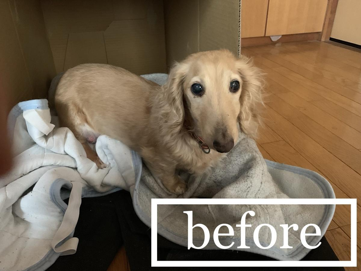 ゴールデンウィークなので数ヶ月ぶりに犬をシャンプーしました
