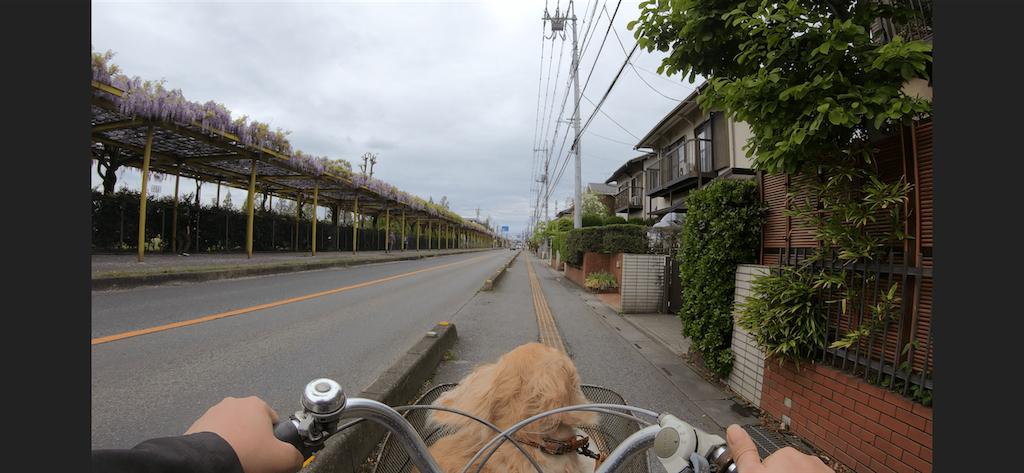 f:id:seikatsuhogo:20190501211551p:image