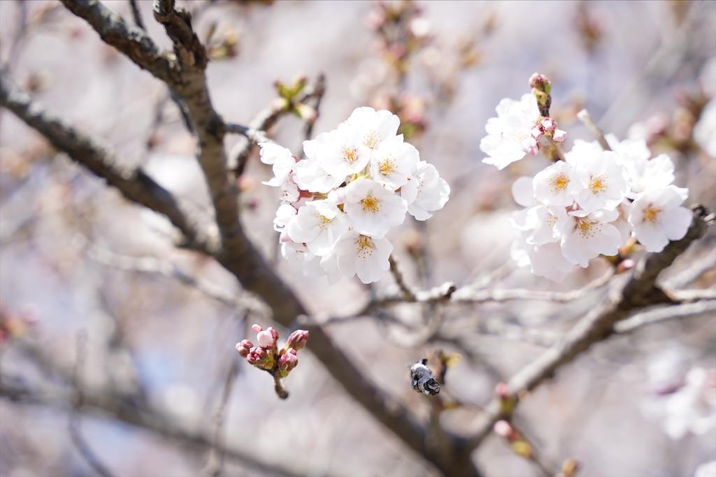 f:id:seikatsuhogo:20200329062923j:image