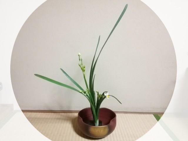 f:id:seikatsukojoiinkai:20171118184643j:image