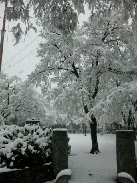 雪中の成蹊3.jpg