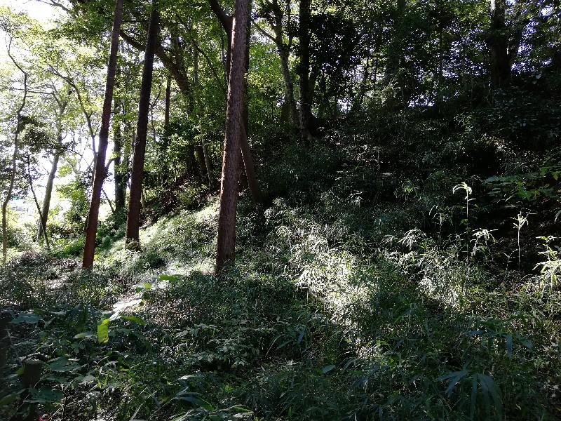 f:id:seiko_udoku:20201108060531j:plain