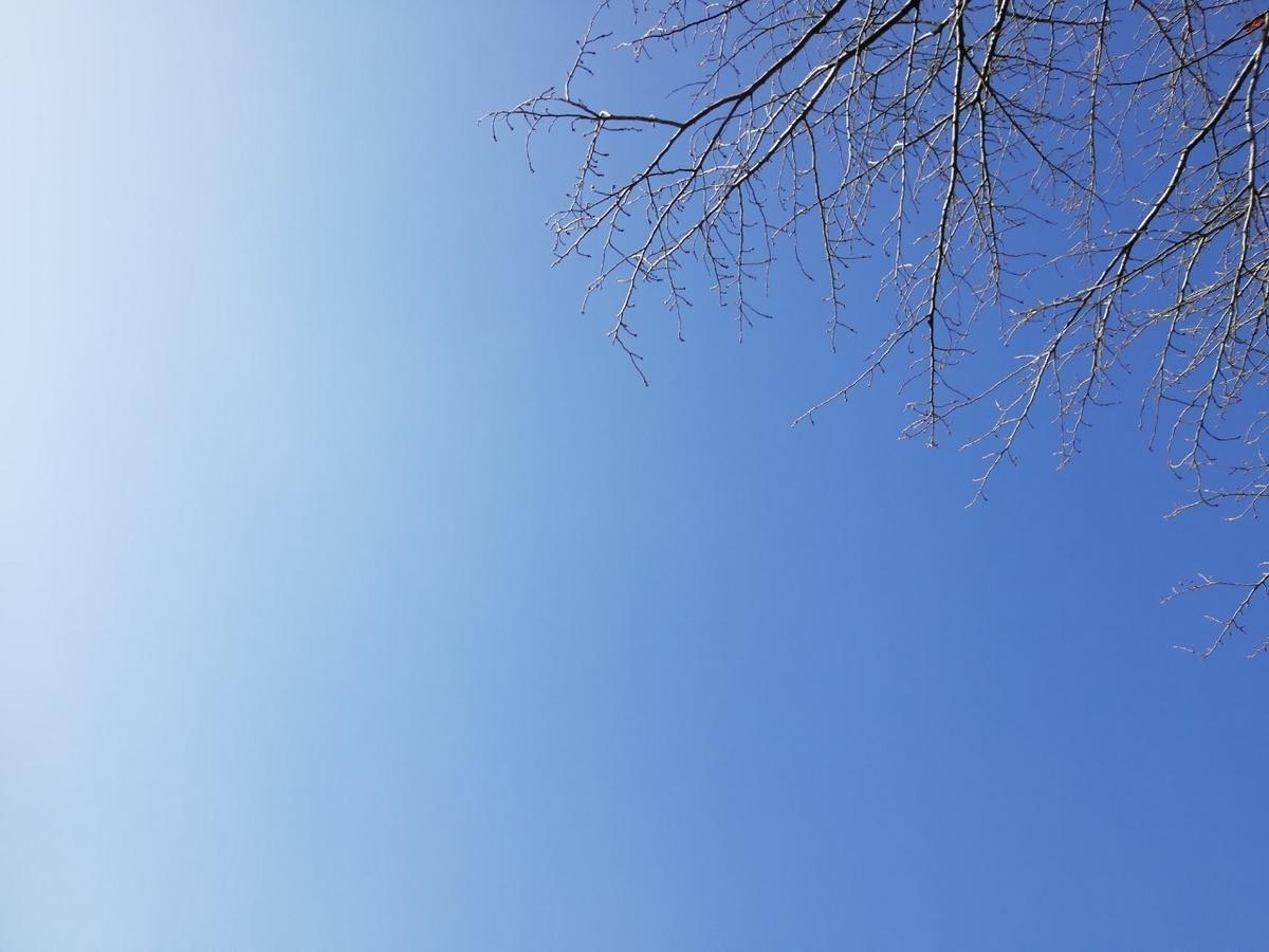 f:id:seiko_udoku:20210108091926j:plain