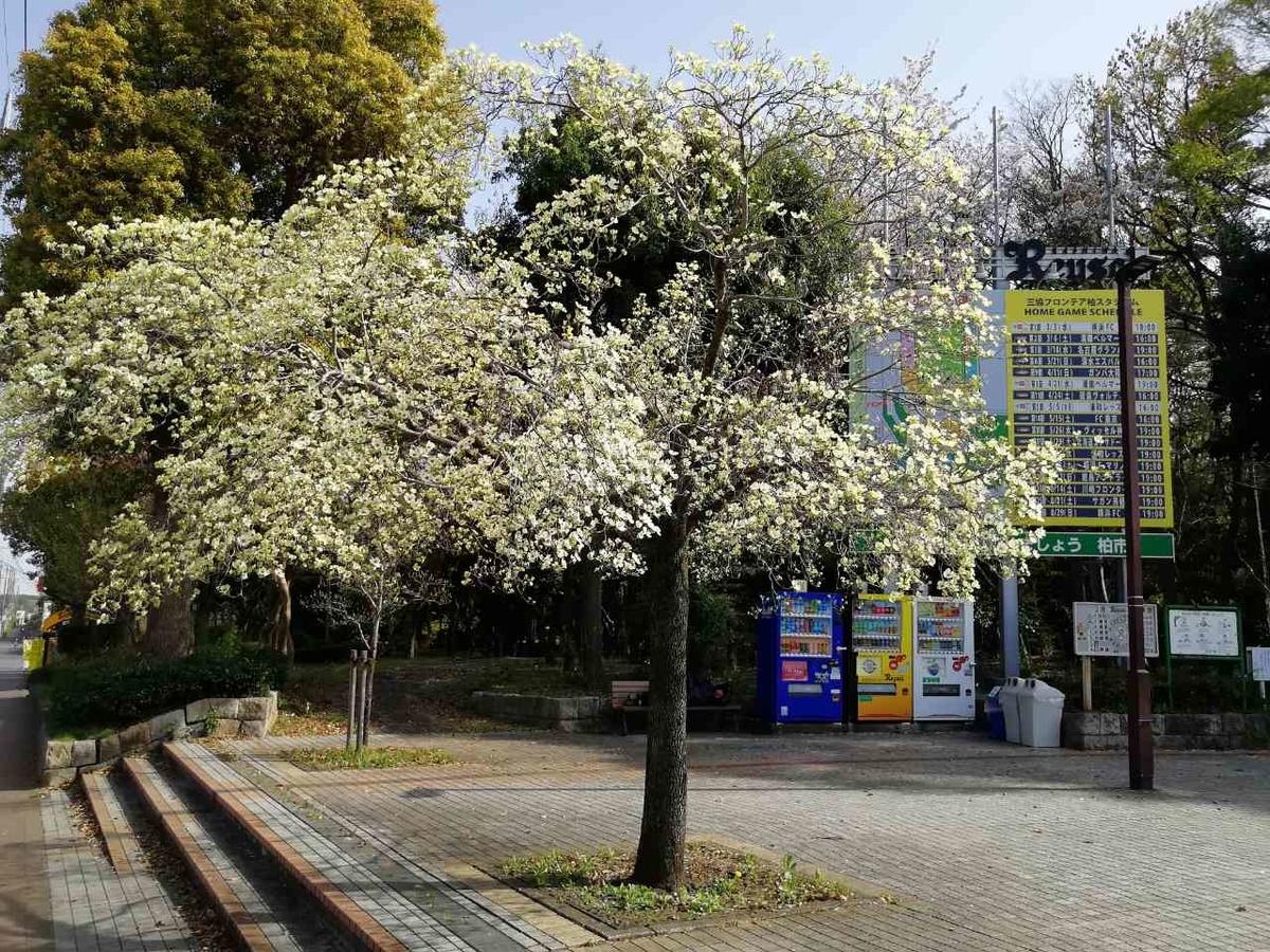 f:id:seiko_udoku:20210403153230j:plain