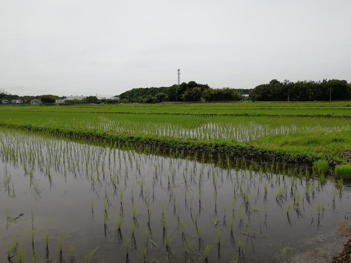 f:id:seiko_udoku:20210529123511j:plain