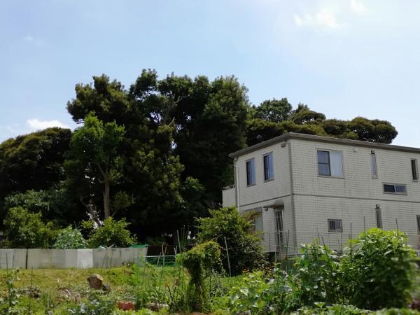 f:id:seiko_udoku:20210619202148j:plain