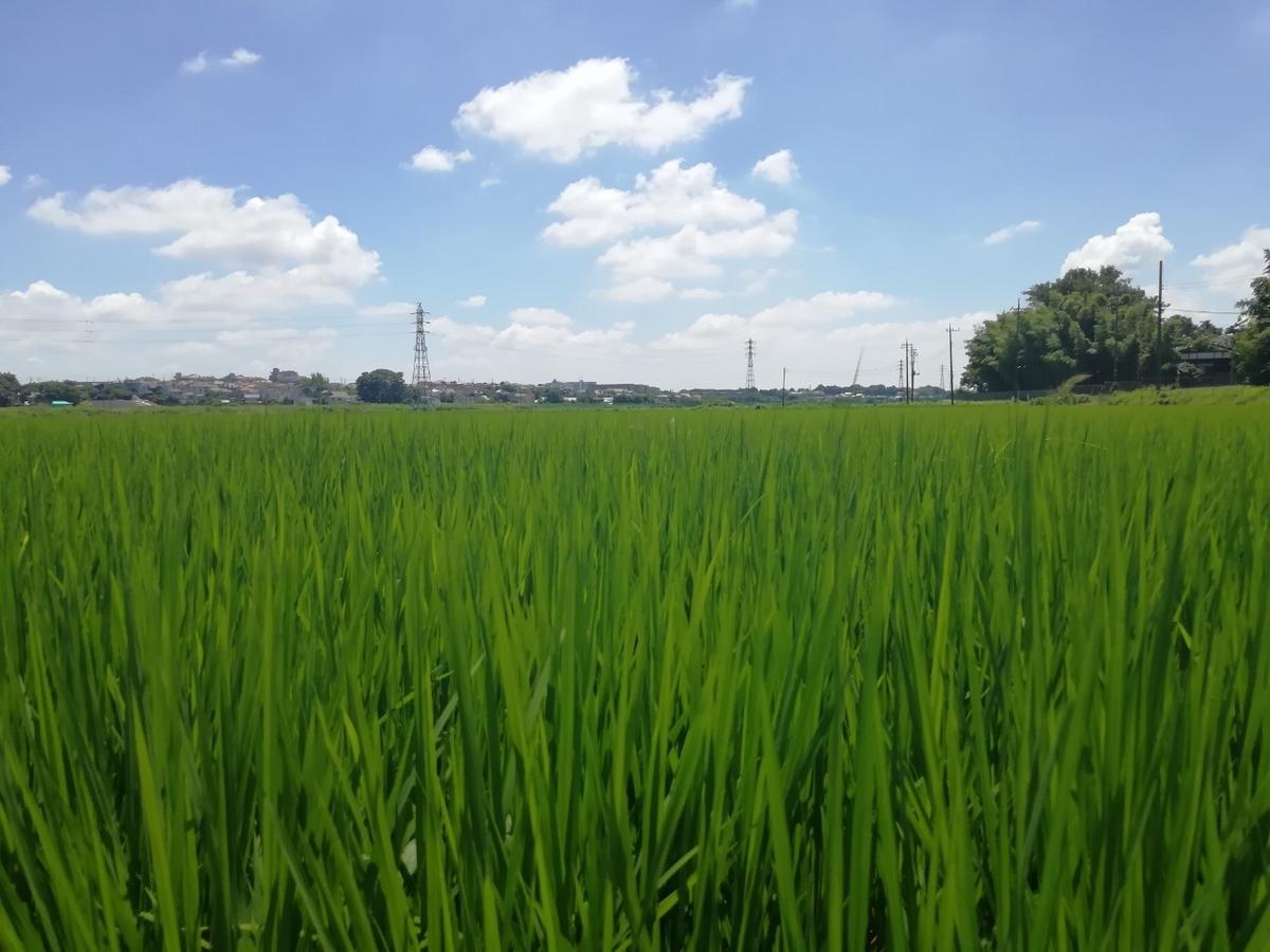 f:id:seiko_udoku:20210719193602j:plain