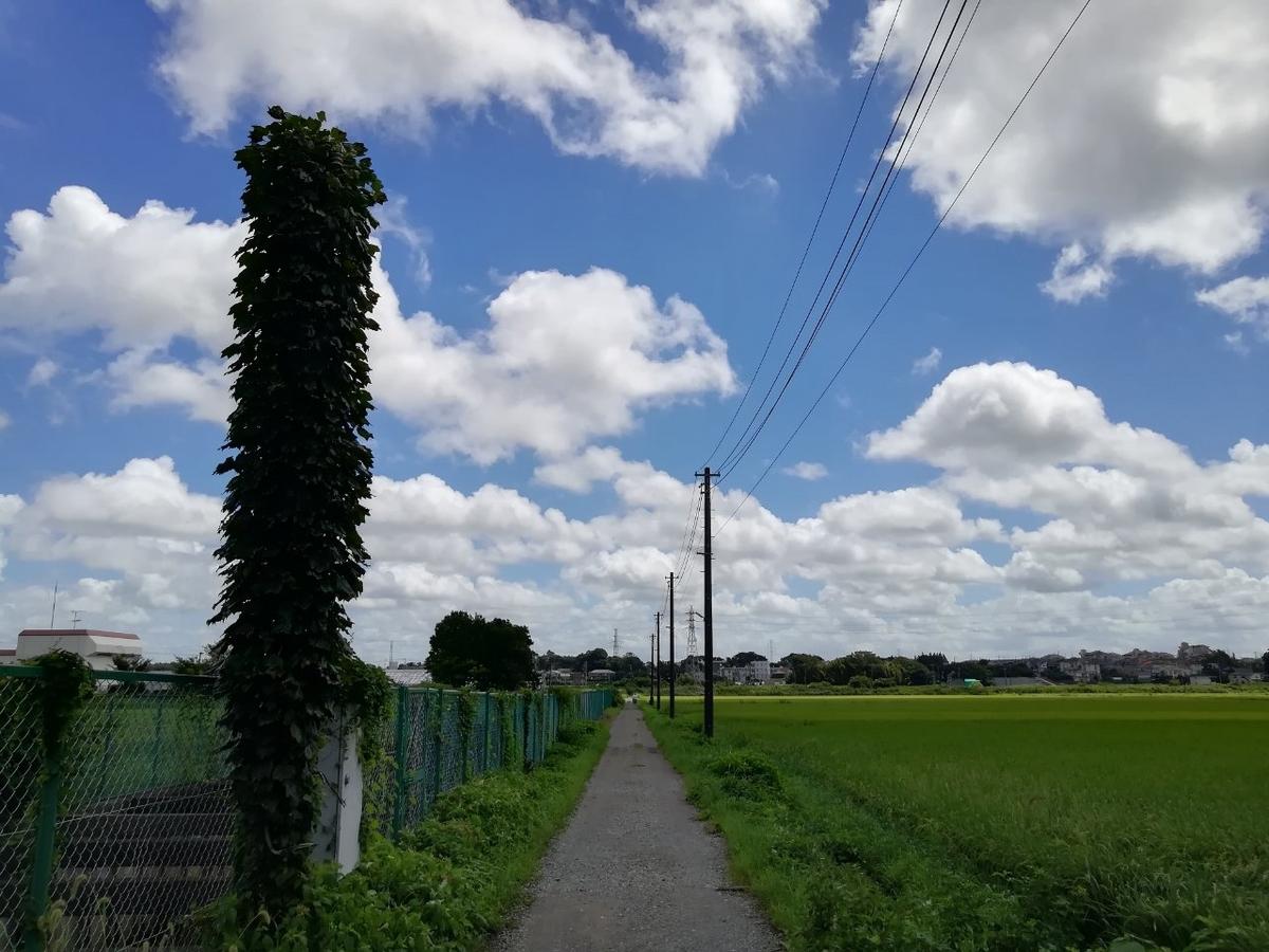f:id:seiko_udoku:20210818210633j:plain