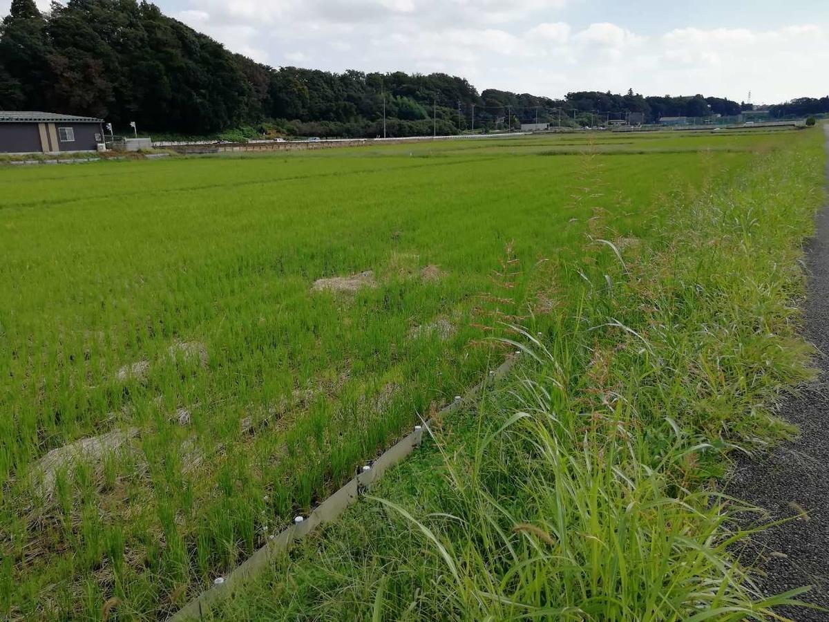 f:id:seiko_udoku:20211016091656j:plain