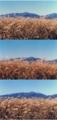 室蘭岳高原ススキの原