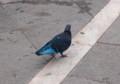 [イタリア]ヴェネツィアの鳩