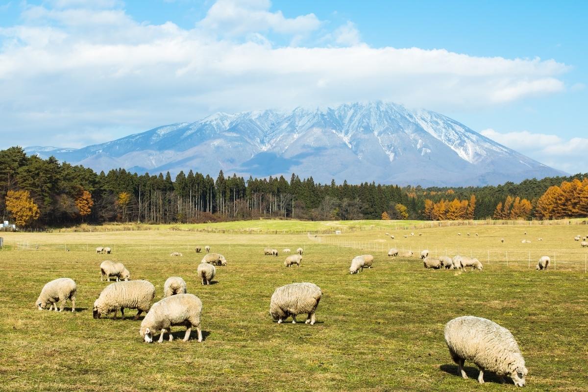 小岩井農場の羊