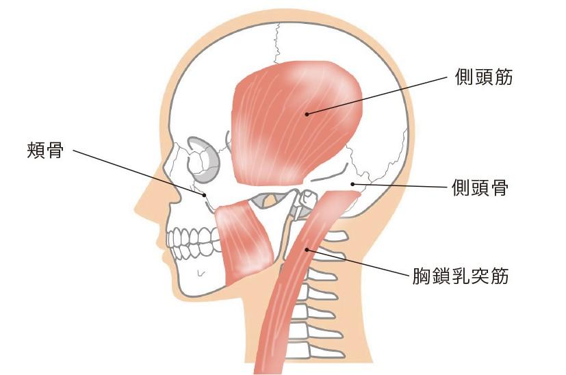 骨と筋肉の様子