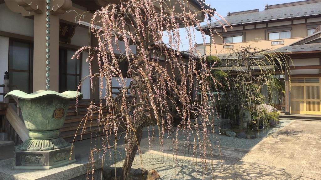 f:id:seitaisi_kenken:20170410010420j:image