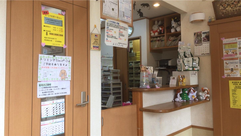 f:id:seitaisi_kenken:20170625100807j:image