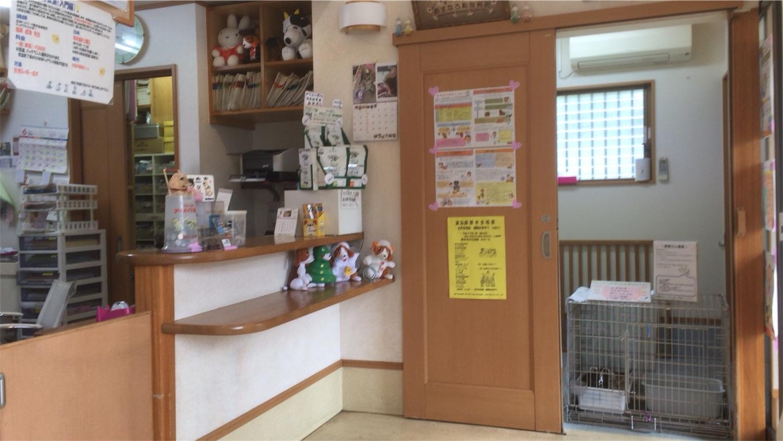 f:id:seitaisi_kenken:20170625100818j:image