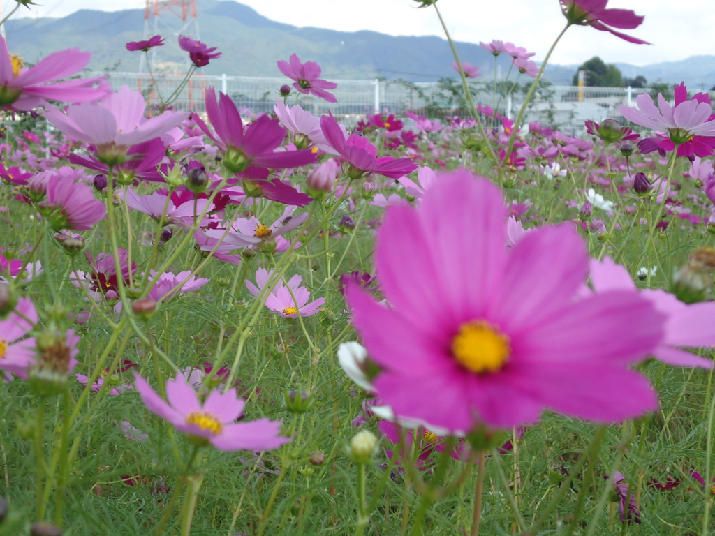 f:id:seiwa-kai:20161019015051j:plain