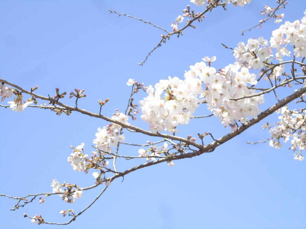 f:id:seiwa-kai:20170404111718j:plain