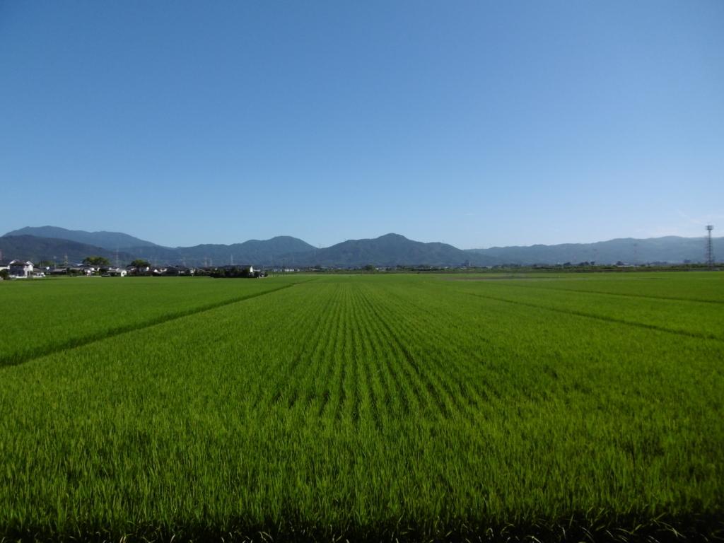 f:id:seiwa-kai:20170822091317j:plain