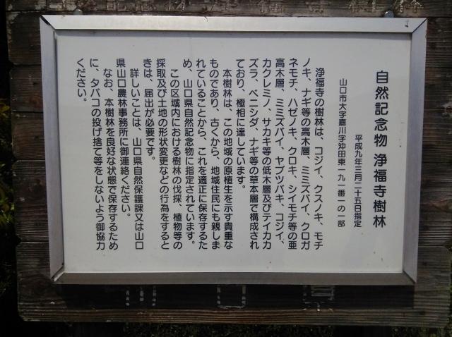f:id:seiwa_yamaguchi:20160624174559j:plain