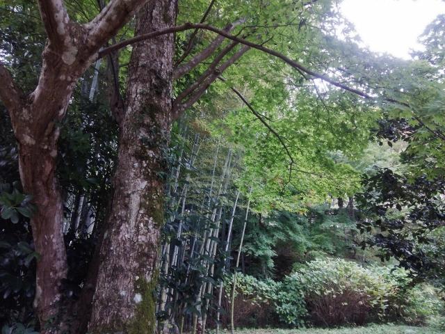 f:id:seiwa_yamaguchi:20161024163434j:plain