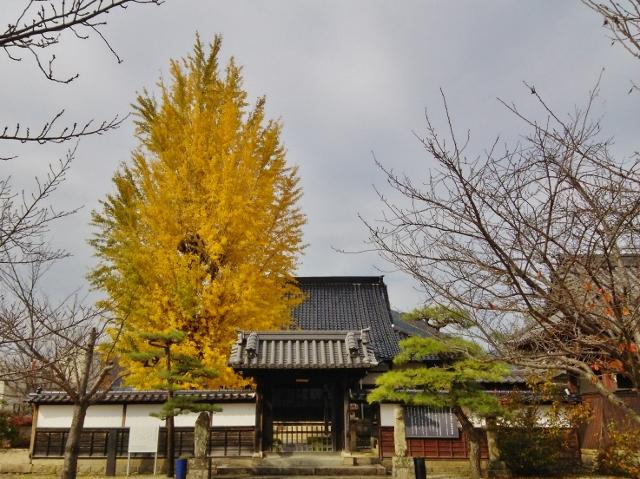 f:id:seiwa_yamaguchi:20161213155825j:plain