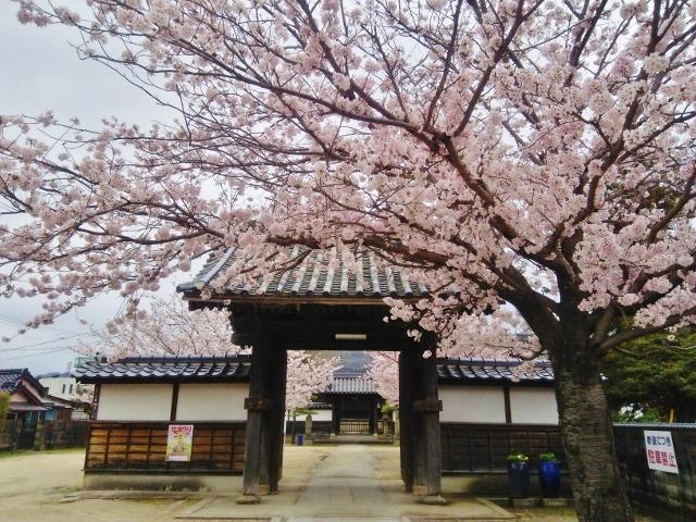 f:id:seiwa_yamaguchi:20170409121353j:plain